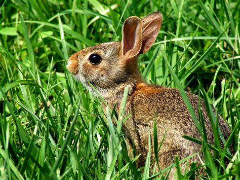 and rabbit pictures of rabbits animal photos