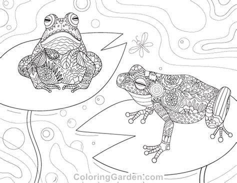 frog coloring page pdf free printable frog adult coloring page download it in