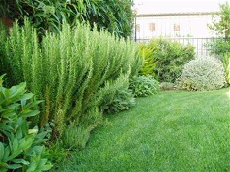 fare il giardino come fare un giardino piante