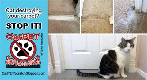 stop cat on rug how to stop your cat from scratching your furniture and carpets
