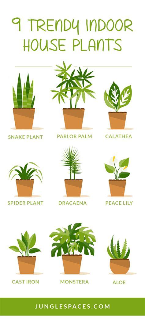 trendy houseplants  dont  direct sunlight
