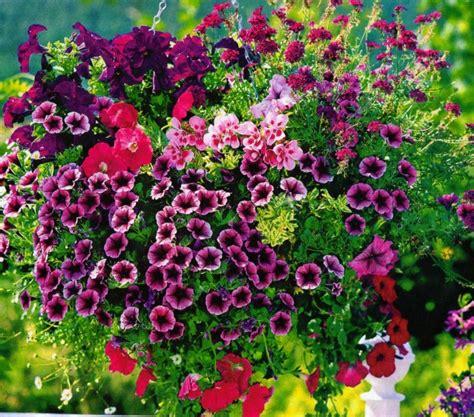 flores de jardin flores bonitas que no deben faltar en el jard 237 n