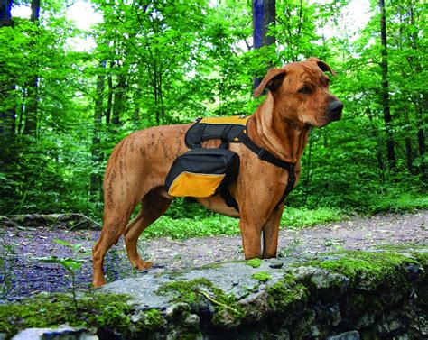 packs and dogs the modern bark tips find your ideal