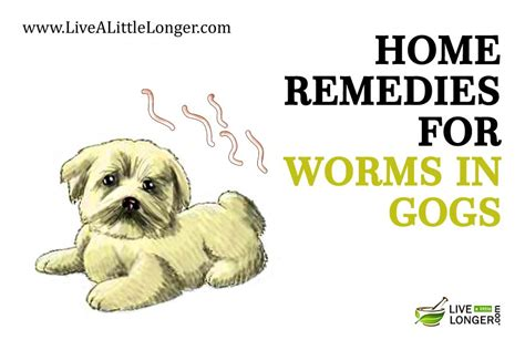 home remedies for dogs 10 best home remedies for worms in dogs page 4