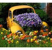 Gardening With Grower Direct Flower Varieties Hobbies