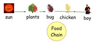 Ford Chaign Image Gallery Organism Food Chain