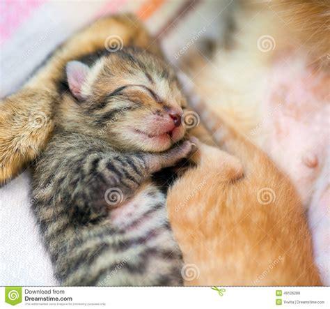 chaton nouveau n 233 de sommeil photo stock image 49126288