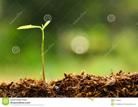 Plants And The Environment plant growing green environment stock image image