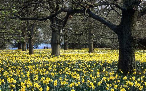 Tree Homes ascott house gardens buckinghamshire uk national trust