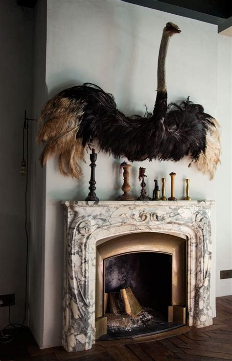taxidermy home decor taxidermy bird all of my dead things pinterest
