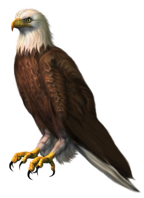 eagle transparent png clipart picture gallery yopriceville high quality images