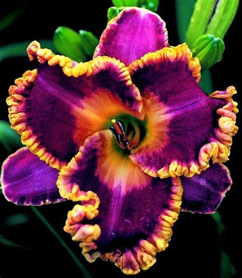 9 Prettiest Flower Bouquets From Missyflowers by 25 B 228 Sta Exotiska Blommor Id 233 Erna P 229 Tropiska