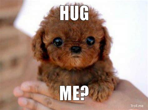 Meme Hug - via www troll me