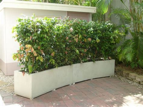 Hedge In Planter Boxes curved garden hedge planter boxes white semi formal