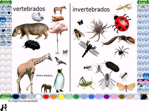 Imagenes De Animales Vertebrados E Invertebrados | los animales vertebrados se subdividen en mamiferos