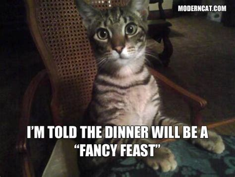 Fancy Cat Meme - more modern cat memes modern cat