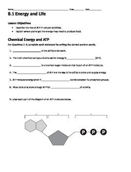 Overview Of Photosynthesis Review Worksheet