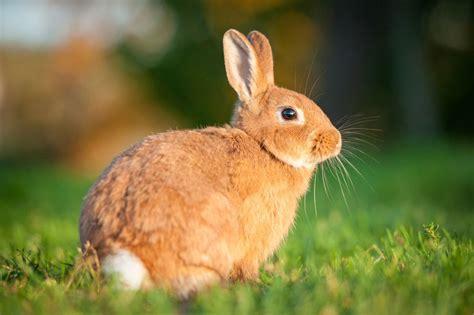 minicuentos de conejos y conejos roedores dom 233 sticos