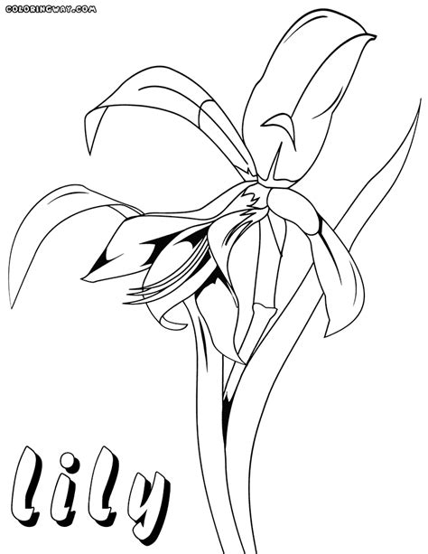 lily coloring pages coloring pages to download and print