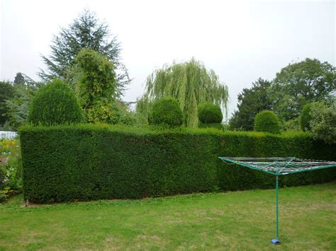 How To Shape Topiary - special branch tree surgeons maidenhead berkshire