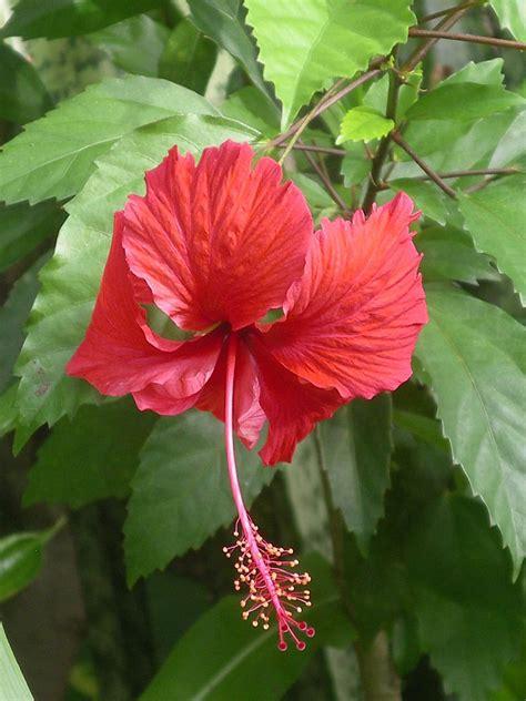 immagini fiori tropicali fiori tropicali la bottega pittore