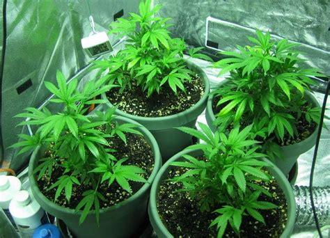 coltivare marijuana vaso costruirsi la propria grow room