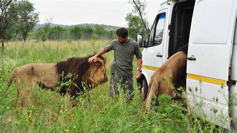 meet  lion whisperer  animal behaviourist