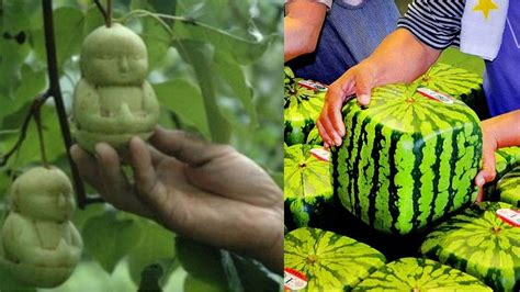 1 fruit in the world top 10 most expensive fruits in the world