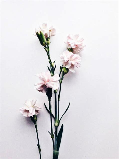 flower wallpaper aesthetic aesthetic flowers best flower 2017