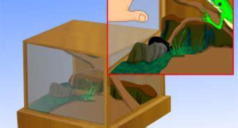 costruire una gabbia come costruire una gabbia da esterni per conigli