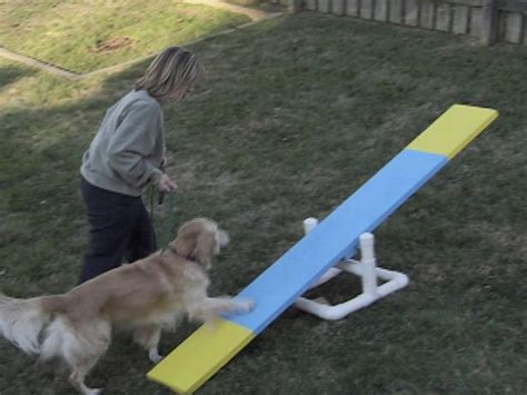 Backyard Obstacle Course For Dogs by 25 Best Ideas About Agility On
