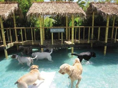 dog house pet resort best 20 pet resort ideas on pinterest dog boarding kennels dog hotel and animal