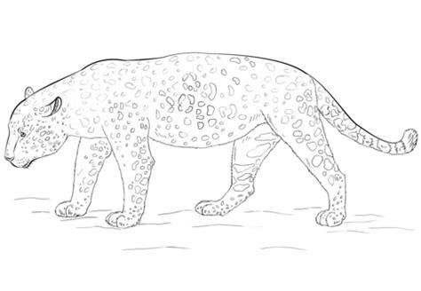 imagenes jaguar para dibujar dibujo de jaguar para colorear dibujos para colorear