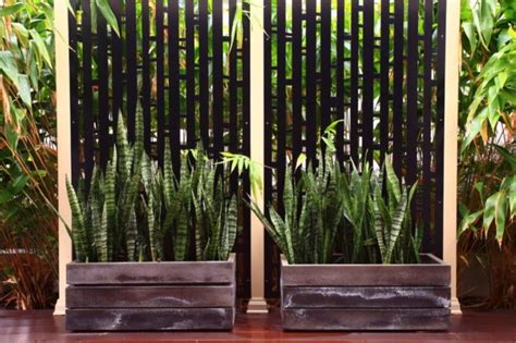 outside plants the best outdoor plants for shaded areas