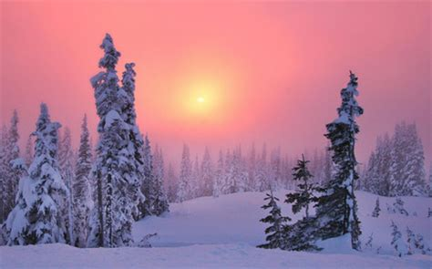 pink winter winter & nature background wallpapers on