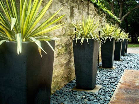 planters and pots tall fern planters landscape contemporary with modern