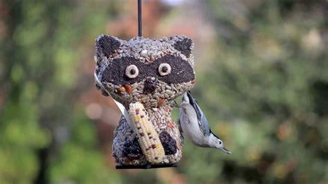 backyard bird shop locations rascal the raccoon seed character video wild birds