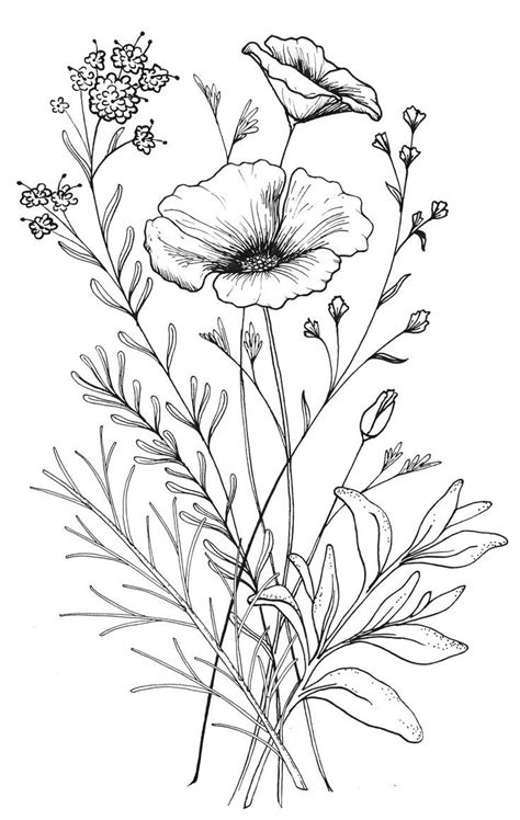 coloring pages of different types of flowers different kinds of flower drawing of flowers drawing