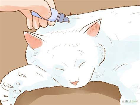 how to get rid of ear mites in dogs 3 easy ways to get rid of ear mites in a cat wikihow