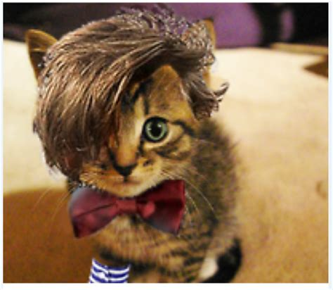 cat wig ninjadiva cats in wigs