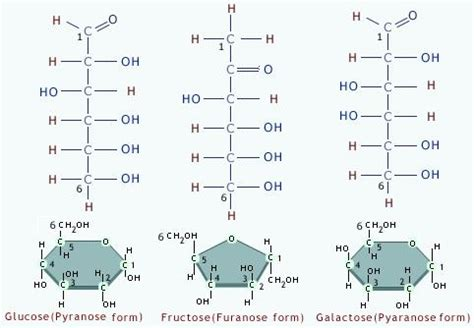 carbohydrates synonym image gallery monosaccharide exles