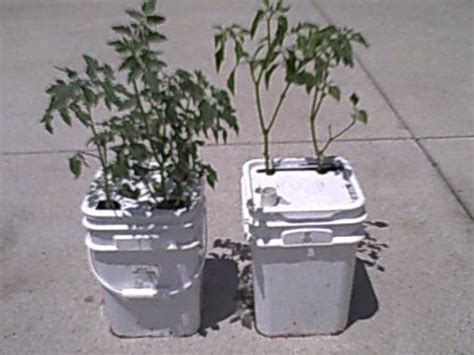 Best Self Watering Planters by How To Make A Single Self Water Regulated Vegatable