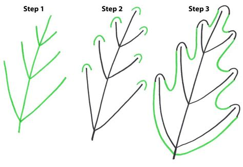Drawing Leaves by How To Draw Simple Leaves Draw