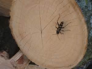 Entomology Study Of Bugs Small Bugs P Ease Help Grain Beetles » Ideas Home Design