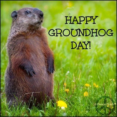 groundhog day yearly results 32 best images about ground hog day on up