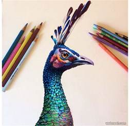 drawing with colored pencils 25 beautiful color pencil drawings and drawing tips for