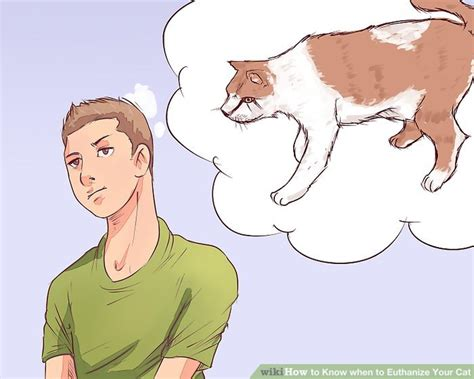 when to euthanize a how to when to euthanize your cat with pictures wikihow