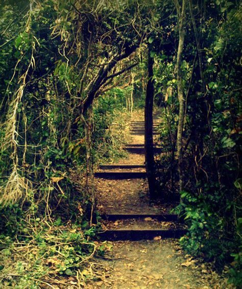 il giardino segreto stromboli il giardino segreto