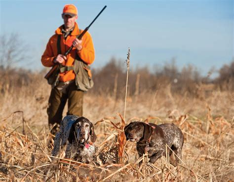 how to a to hunt small small forecast mostly missouri department of conservation