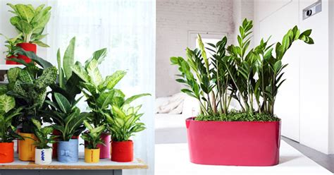 best plants for desk want to feel freshness creative keep top 10 plants on